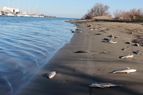 Maritima info faits divers port saint louis mort - Plage napoleon port saint louis du rhone ...