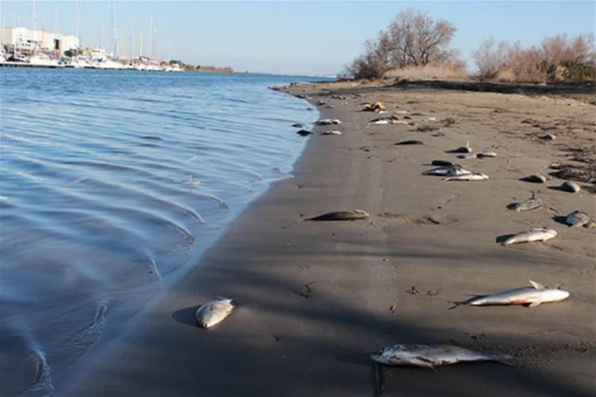 Port Saint Louis Faits Divers Mort Massive De Poissons A Port